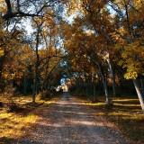 autumn-3349621_960_720