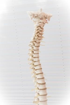 spine-2539697_960_720