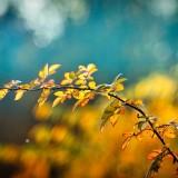 autumn-3846345_960_720