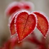 leaves-4673997_960_720